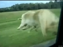 Собака-уебака