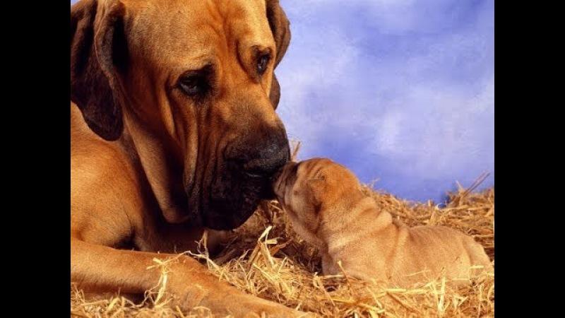 Животные Мамы Детеныши Забота Дружба и Любовь в мире животных фото HD