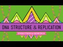 DNA Structure and Replication Crash Course Biology 10