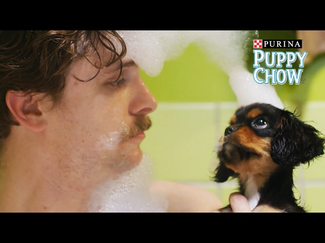 Puppyhood We Met A Girl Presented by BuzzFeed Purina Puppy Chow
