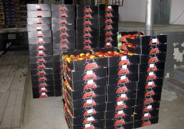 В Бурятии уничтожили 700 кг польских яблок