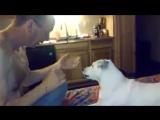 Собака реагирует на фокус