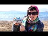 Щенячий патруль. Эверест и Маша на пляже. мультики и видео для детей
