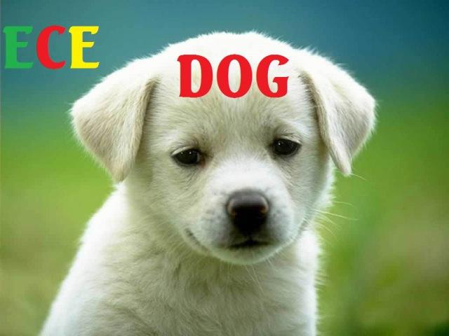 Bé học tiếng Anh qua động vật: dạy trẻ nhận biết các con vật bằng tiếng anh | Giáo dục trẻ em ECE 2