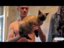 СМЕШНЫЕ КОШКИ Подборка самых смешных видео про кошек и котов