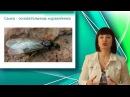 Отряд перепончатокрылые пчелы муравьи наездники Класс Насекомые Уроки Биологии Онлайн