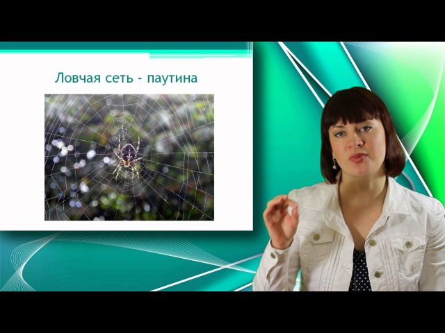 Паук - крестовик. Класс Паукообразные. Уроки Биологии Онлайн
