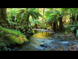 Красота дикой природы Австралии!