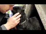 30 year old cat Soot from Toronto30-летний кот Сут из Торонто.