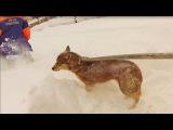 Чудесное спасение собаки на Рождество!Ежебудни спасателей-16.