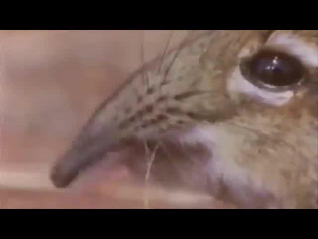 Take a closer look at that snout gachimuchi edition cancer van darkholme