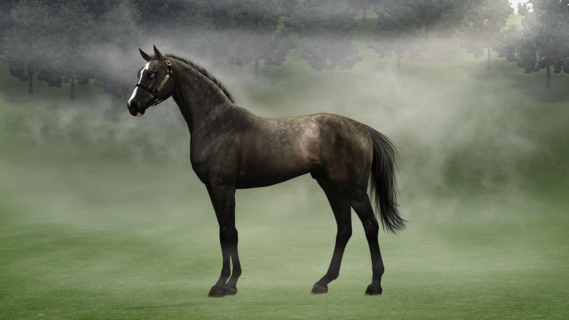 Регистрация лошадей в RHF 2 - Страница 4 S7F6qH_D5bI