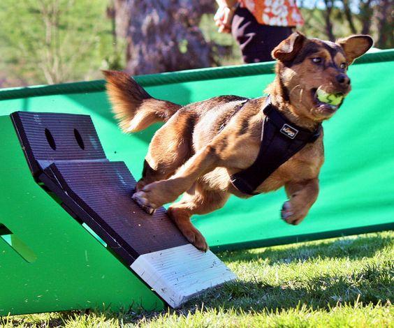 Фитнес для собак \ Фитнес по-канарски для молоссов - Страница 2 FX4_R4vaiWU