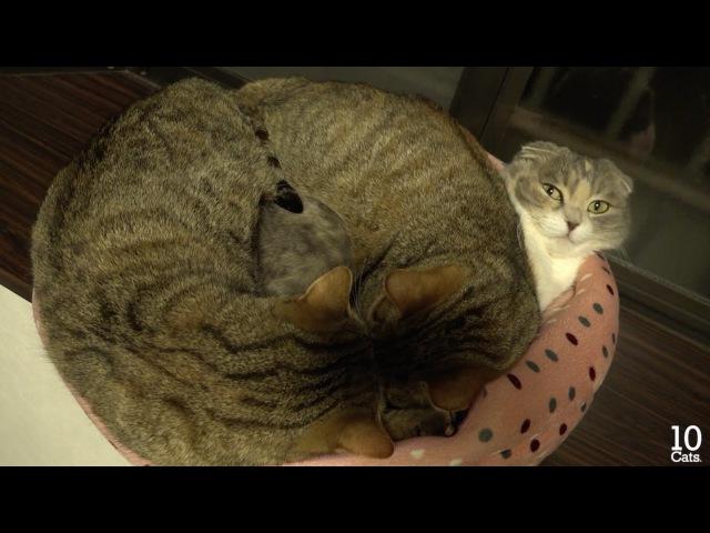 Mom cat μ can't move in heavy her 2 kittens. 重い2匹の子猫に動けないママ猫ミュー。