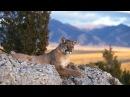 Дикая природа. Животные Северной Америки. Документальный фильм. National Geographic.