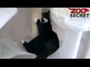 Котик играет в домике для кошки