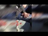 Подборка приколов) Сочная попка) Я ржал до слёз [Выпуск #15] (18 )