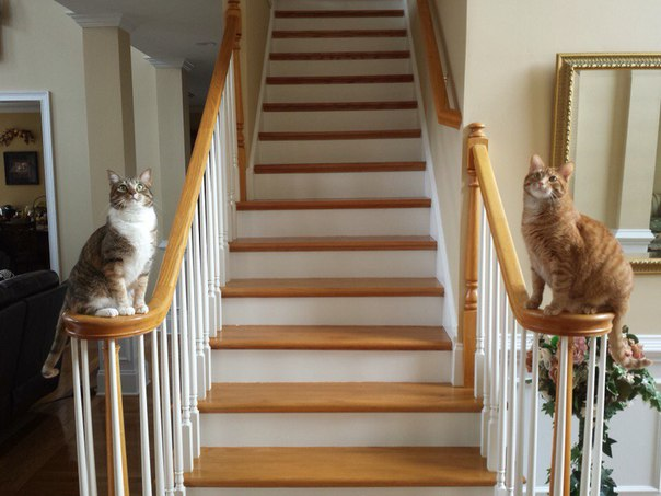 Если бы у меня было своё королевство, то это было бы королевство котиков