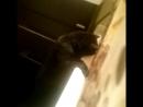пушистый кот котёнок феникс чёрный кот жирный кот сумасшедший кот кот в ванной