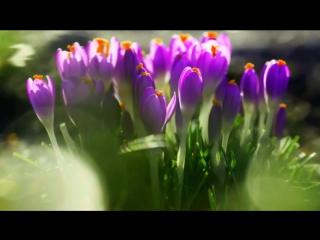 Пробуждение ВЕСНЫ. Пение птиц в весеннем лесу. Дождь