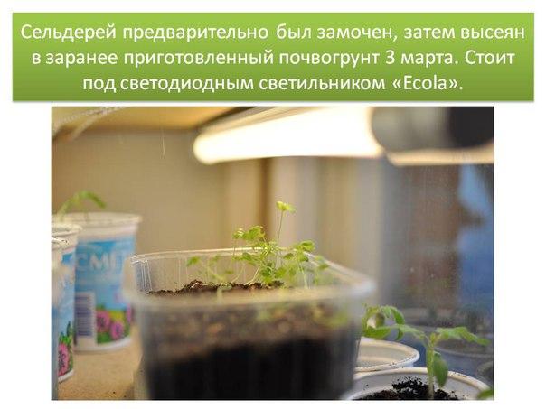 Светодиодный светильник Ecola