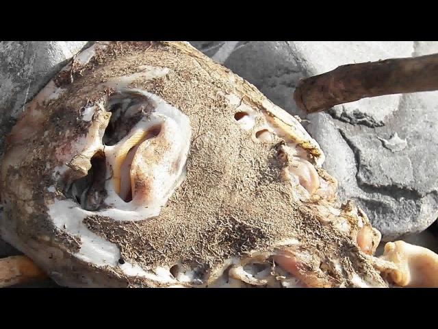 Шок Что за существо море выбросило на берег