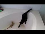 Кот-истеричка и невозмутимый ящер)))