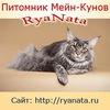 "Питомник Мейн Кунов ""RyaNata"", Рыбинск"