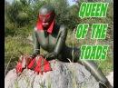 Guitar Slingers Queen Of The Toads Diablo Records