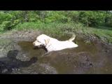 Собаки, они такие! Лабрадор-ретривер по кличке Стелла научит вас радоваться жизни