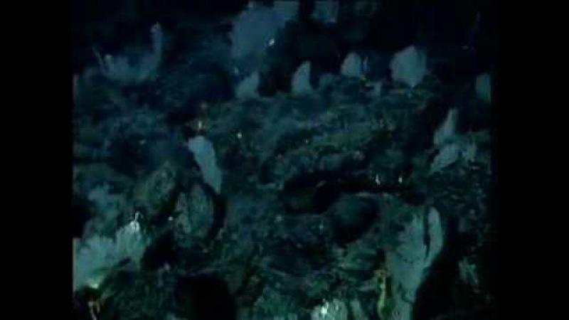 Gulf of Alaska 2002: Exploring Alaska's Seamounts Highlights