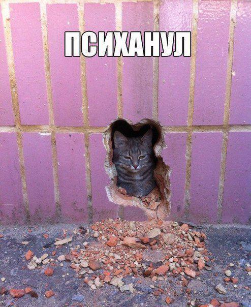 Завтра в Минске будут пикетировать посольство России в знак поддержки Надежды Савченко - Цензор.НЕТ 8705