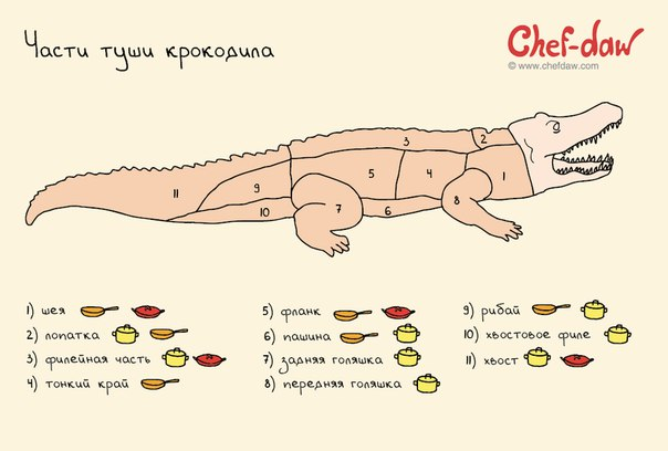 Части туши крокодила
