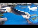 Jealous Anteater Desperately Wants To Steal Duck's Food. Can He Reach It? - Dailymotion Video