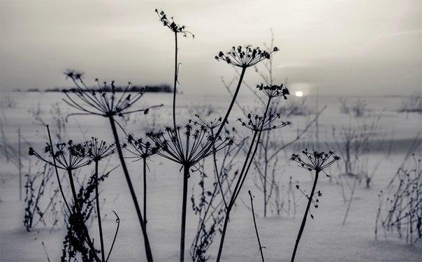 Завтра ветер в Псковской области утихнет - прогноз  http://pln-pskov.r