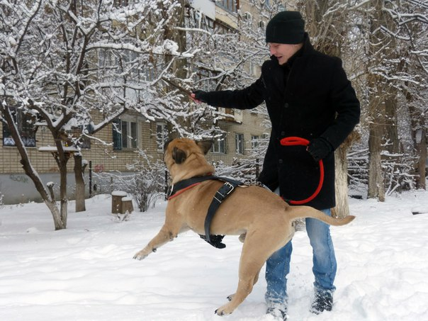 Воспитание щенка - Страница 2 ChuLxz3OC2k