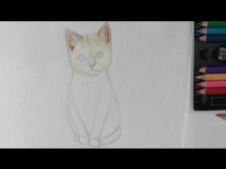 Уроки рисования. Как нарисовать КОТЕНКА акварельными карандашами ArtBerry  КОТ поэтапно
