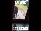 """Perfect Videos on Instagram: """"Next time this bear is going to bring a cucumber and show this cat who the real pussy is #perfectvideos"""""""