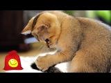 Игры кошек. Смешные коты играют
