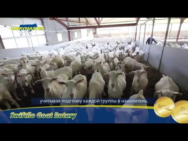 Доение 1800 коз - легко и с удовольствием!