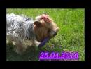 Puller Dog,Stefania,25.04.16