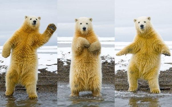 😏Когда Дима вечерком вышел на танц-пол😏