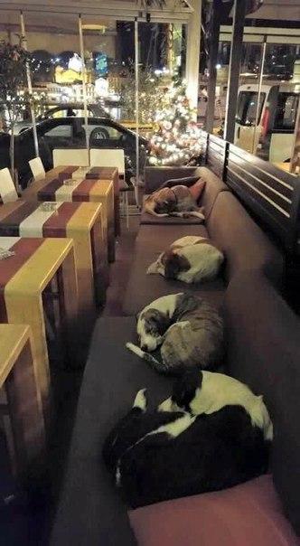Это кафе в Греции, которое открывает свои двери каждую ночь для бездом