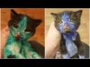 Работники приюта отмыли раскрашенных маркерами котят Смурфа и Шрека