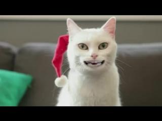 С Новым годом!Кот поёт извесную песню 2016