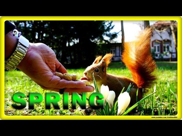 Spring for my squirrel • leipzig / clara-zetkin-park