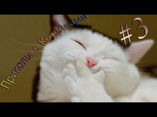 ТОП Приколы #3 Приколы с котами, смешные нарезки приколов Январь 2016 | Best funny cats January 2016