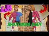 Анатомия Плеч - ТОП 5 упражнений на плечи