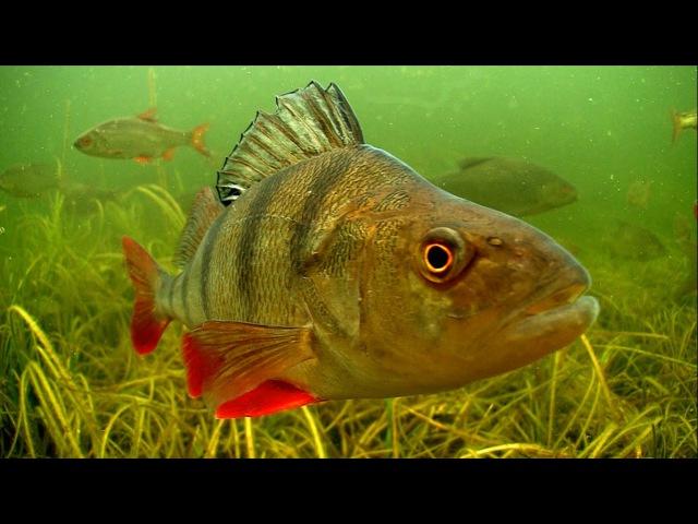 Freshwater underwater stock footage from Ireland. 水下的影视素材. Subacuáticas archivos. أرشيفات تحت الماء