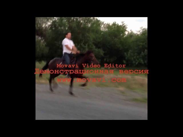 Лошадь-иноходец